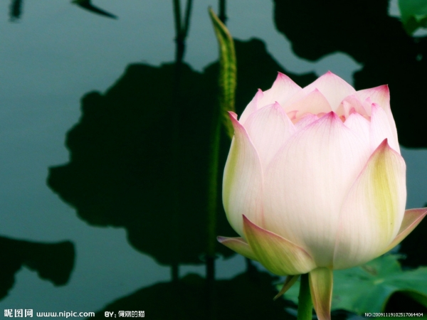 Ý nghĩa hoa sen trong Phật giáo