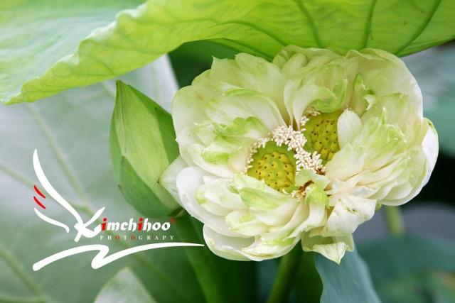 sen-tinh-de-viet-nam-vua-no-1-hoasenvang.com.vn.jpg